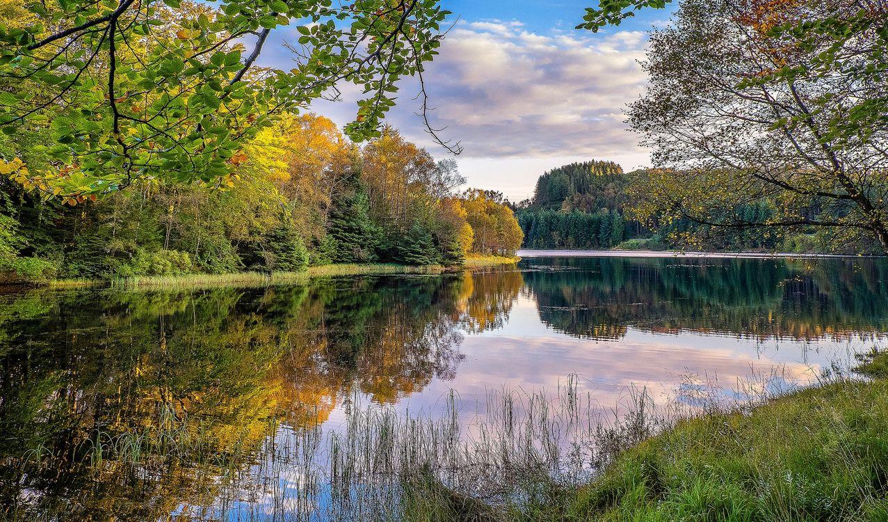 Фото бесплатно Норвегия, осень, река, лес, деревья, пейзаж, пейзажи