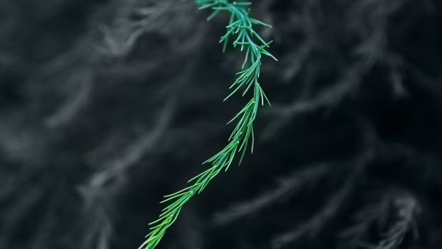 Фото бесплатно веточка, зелёный, размытия