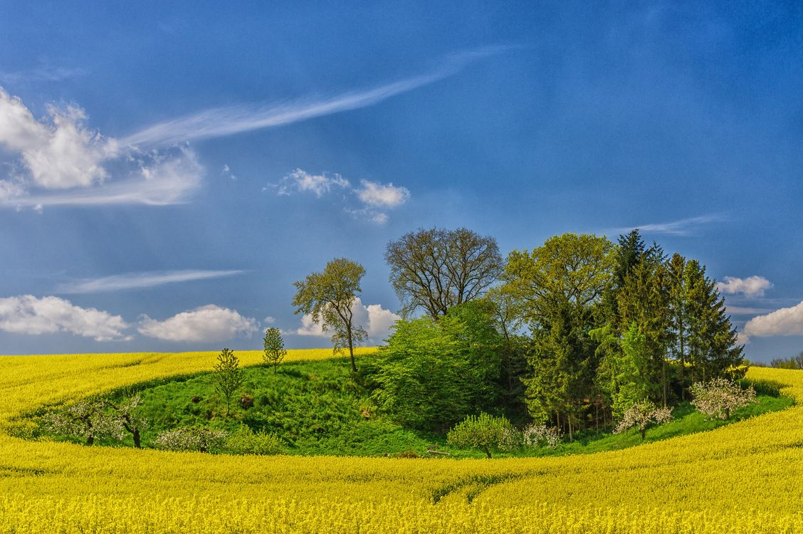 Фото бесплатно поле, деревья, цветы, пейзаж - на рабочий стол