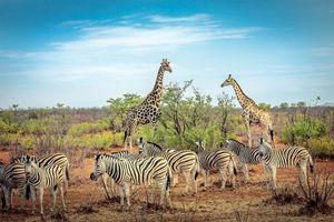 Бесплатные фото Африка,животные,парк,зебра,зебры,жираф,жирафы