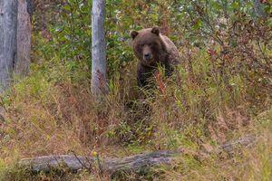 Фото бесплатно Lake Clark National Park, Alaska, Медведь