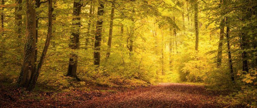 Фото бесплатно лес, лиственный, осень