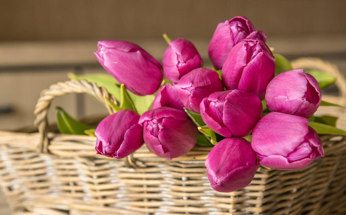Фото цветы букеты тюльпан - бесплатные картинки на Fonwall
