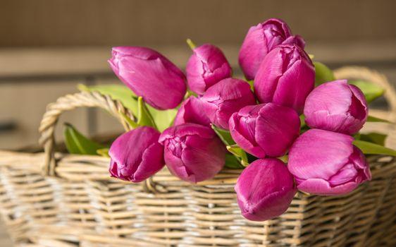 Фото бесплатно цветы, букеты, тюльпан