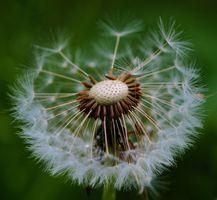 Фото бесплатно полевой цветок, бесплатные изображения, фотографии