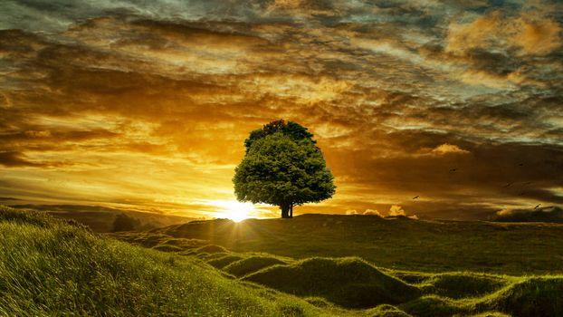 Фото бесплатно деревья, небо, дом