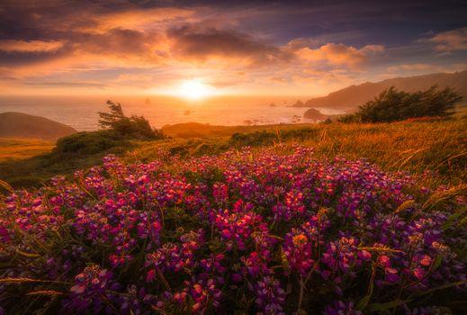 Посмотреть фото закат, цветы