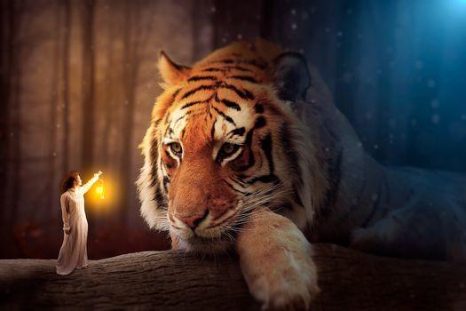 Заставки тигр, девушка, лампа