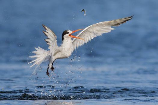 Фото бесплатно Белая птица, рыбка, добыча