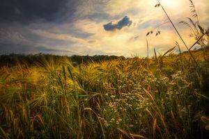 Фото бесплатно уши, ромашки, пейзаж