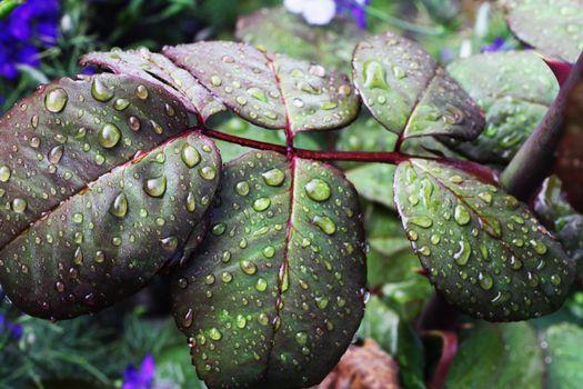 листья, капли, влага, leaves, drops