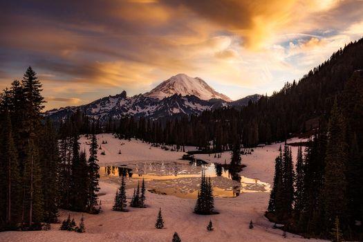 Photo free forest, nature, Mount Rainier National Park