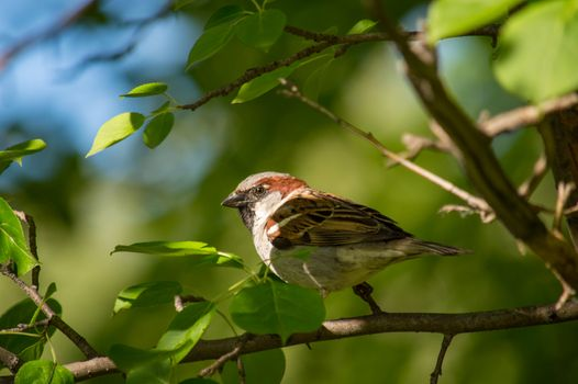 Photo free bird, Sparrow, branch