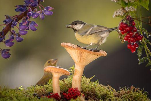 Photo free a bird, mushrooms, berries