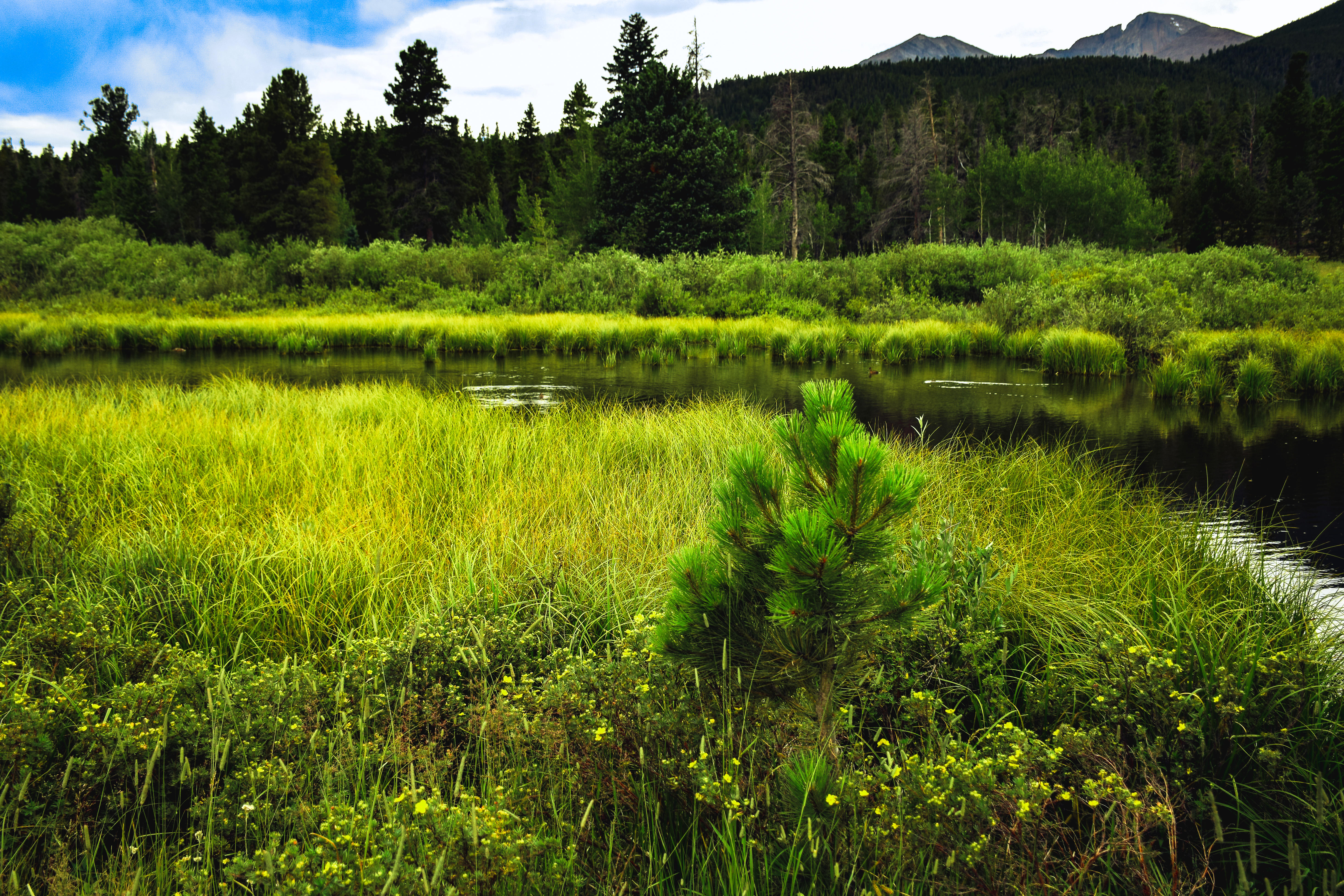 Обои река, трава, лес, деревья