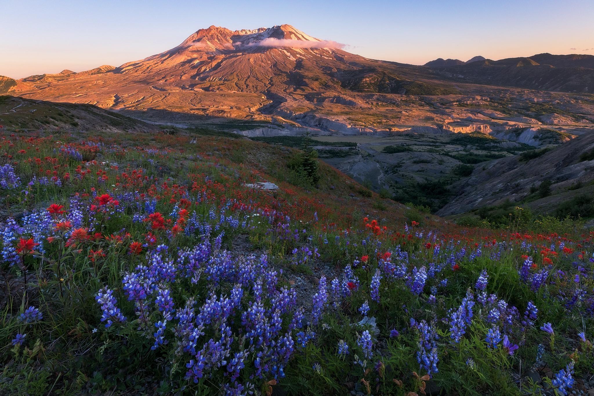 Обои Вашингтон, Гора Сент-Хеленс, поле, цветы