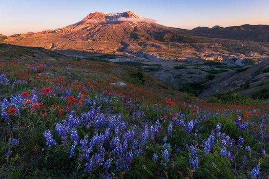 Бесплатные фото Вашингтон,Гора Сент-Хеленс,поле,цветы,пейзаж