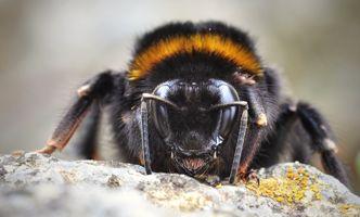 Фото бесплатно дикая природа, насекомое, фауна