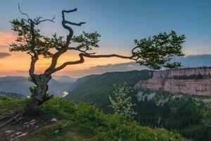 Фото бесплатно Швейцария, горы, дерево