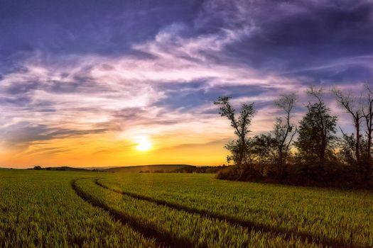 Заставки закат, поле, колосья