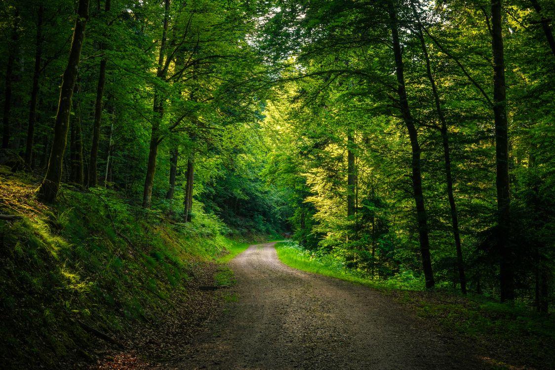 Обои дорога, лес высокого качества