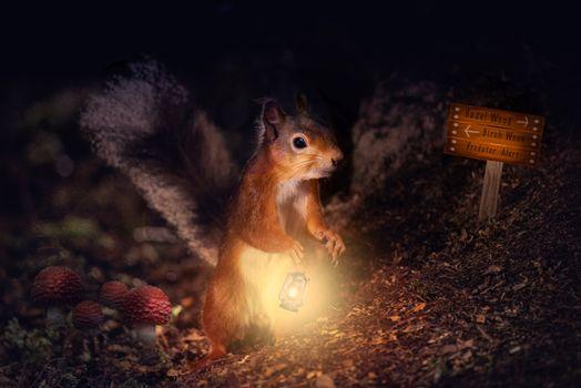 Фото бесплатно белка, фонарь, лампа