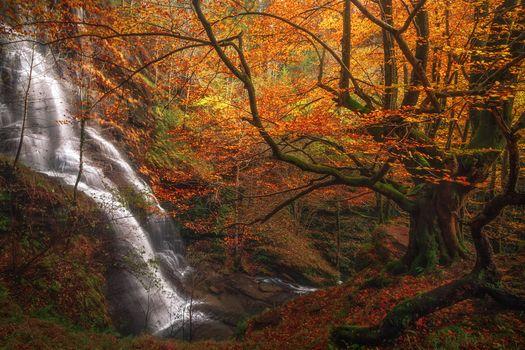 Фото осень, лес - обои на стол