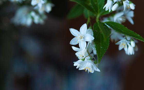 Photo free bloom, blur, macro