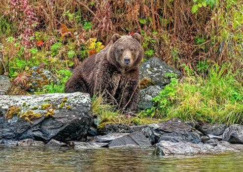 Photo free animal, brown bear, beast