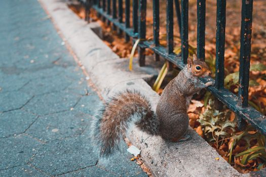 Squirrel in the city · free photo