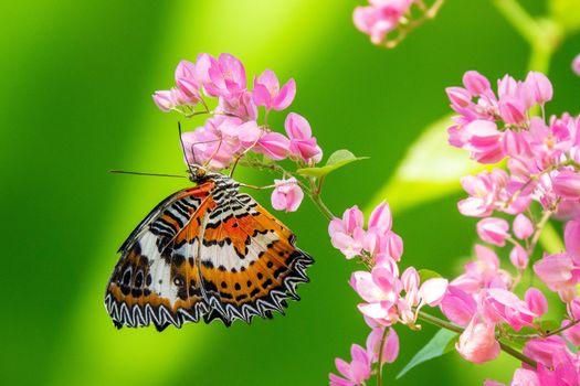 Фото бесплатно насекомые, бабочка, зеленый фон