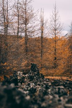 Photo free autumn, forest, picturesque