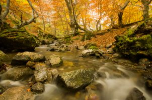 Заставки осень, природа, мох