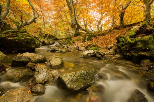 Photo free autumn, nature, moss