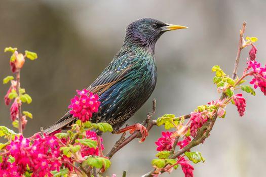 Photo free spring, Sparrow, branch