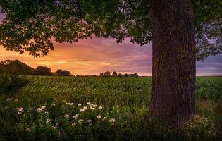 Бесплатные фото закат, поле, цветы, дерево, пейзаж