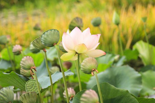 Фото бесплатно флора, цветок, красивые цветы