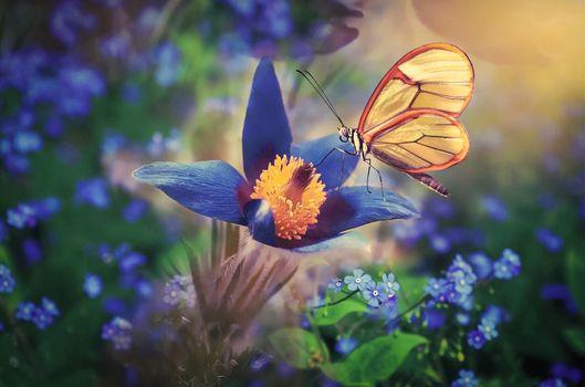 Photo free flower, flowerbed, flowers