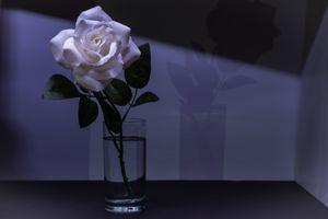 Фото бесплатно цветок, роза, ваза
