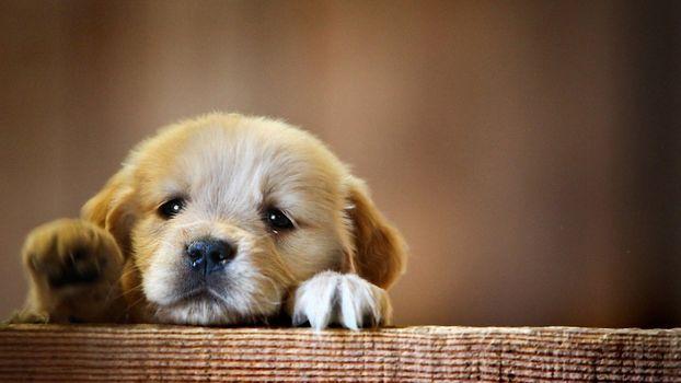 Фото бесплатно собака, животные, щенок