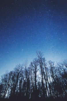 Photo free starry sky, trees, sky