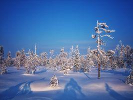 Заставки природа, деревья, сугробы