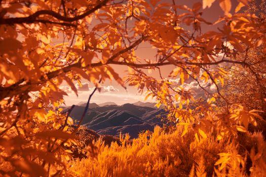 Фото бесплатно осень, горы, ветви