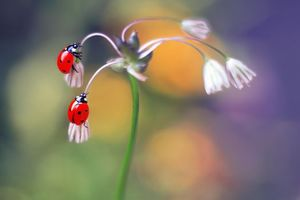 Бесплатные фото божья коровка,цветок,насекомое,макро