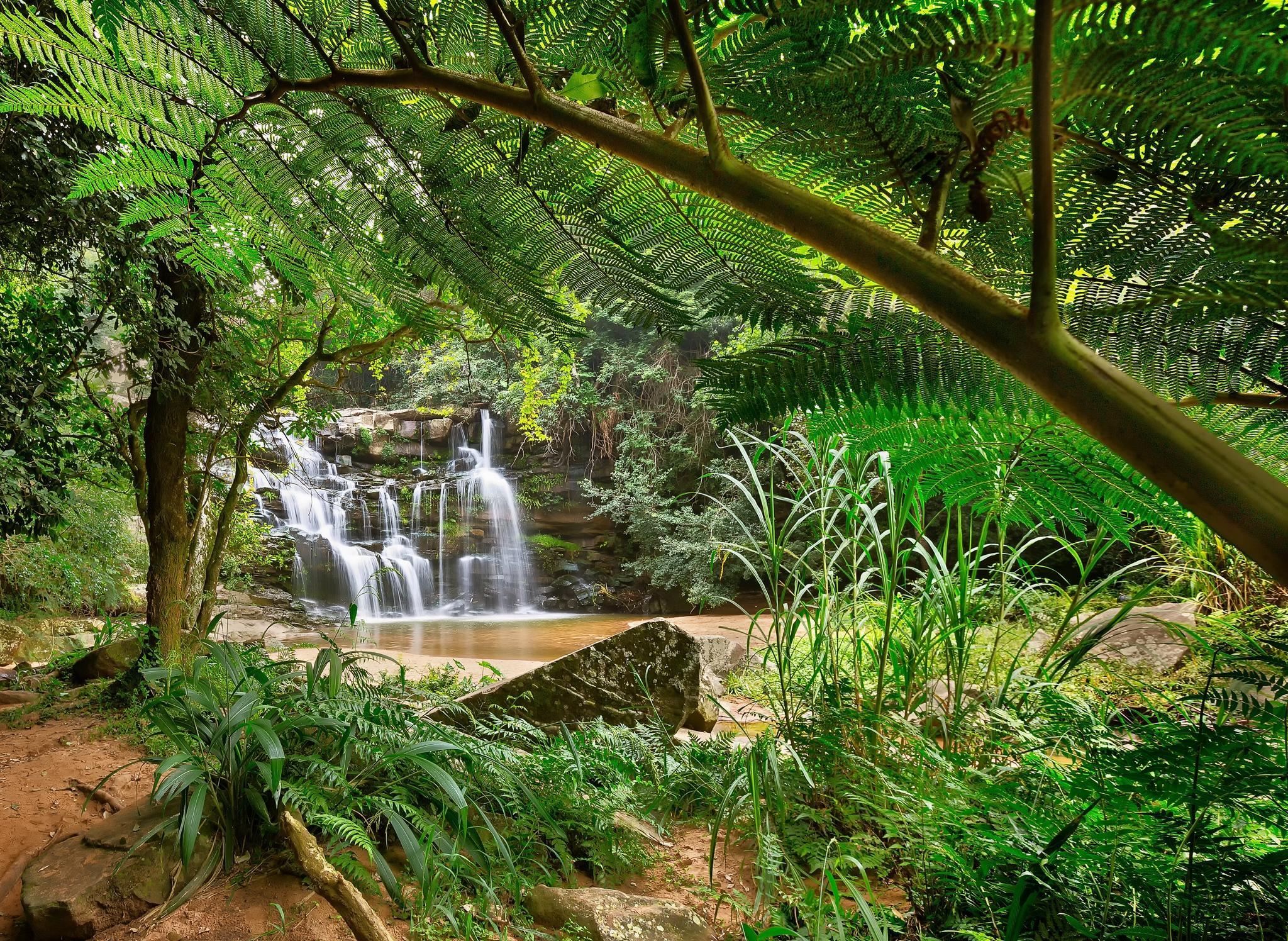 Обои лес, деревья, джунгли, водопад