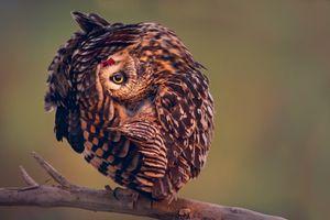 Фото бесплатно дикая природа, хищная птица, сова