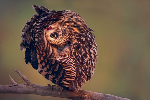 Photo free wildlife, bird of prey, owl