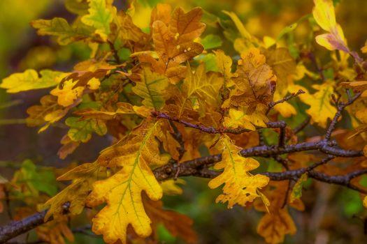 Photo free oak, tree, branch