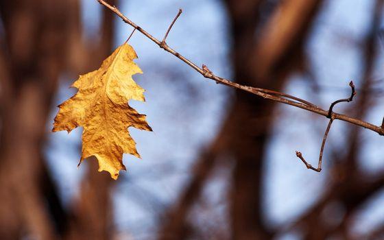Заставки лист, осень, ветвь