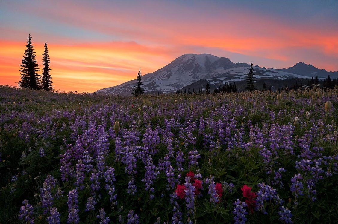Обои Mount Rainier National Park, Washington, Альпийский луг картинки на телефон